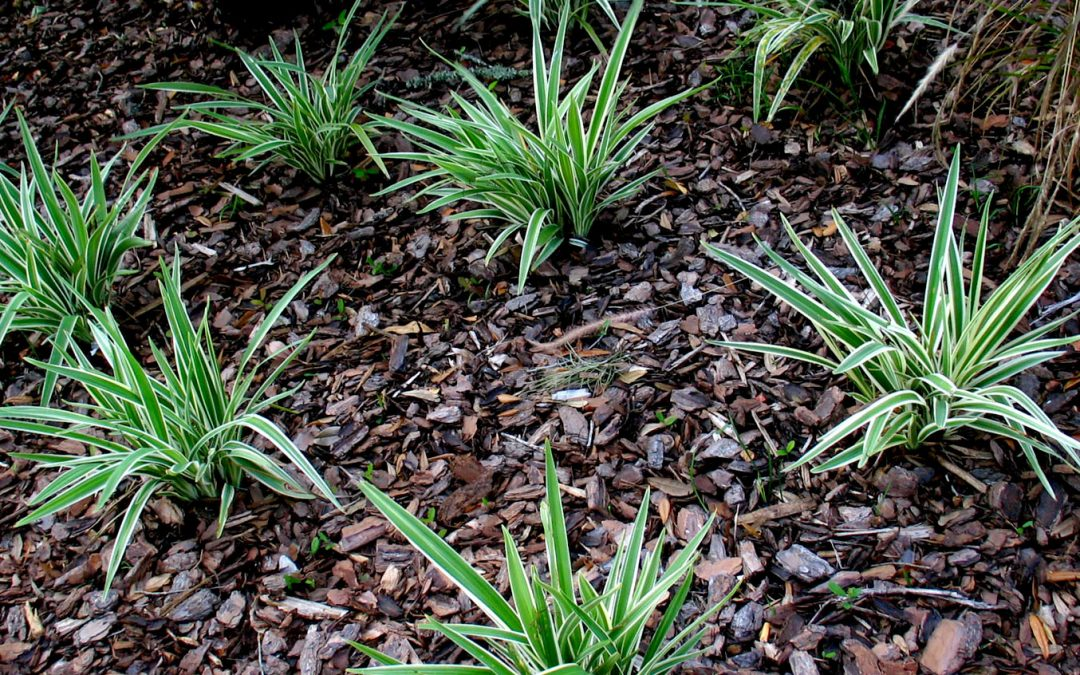 16 Reasons Why You Should Hire a Mulching Service