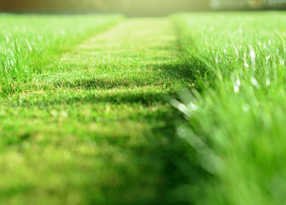 Tips For Choosing The Right Lawn Service