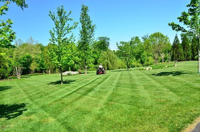 Best Lawn Mowing Techniques